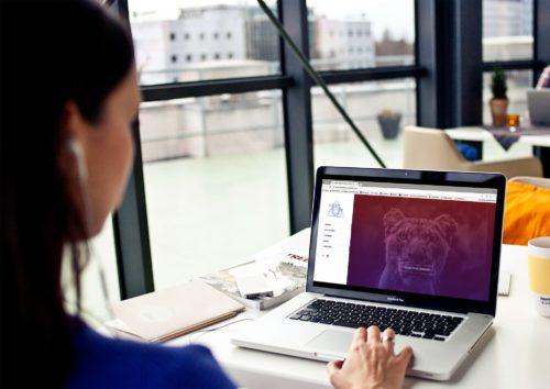 creative donut best web design next step nutrition